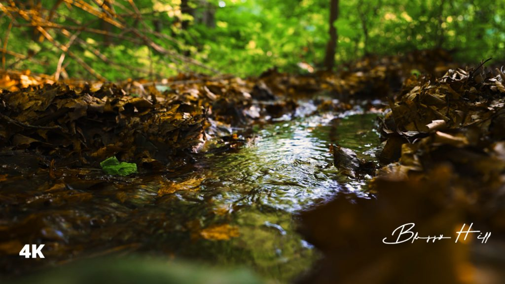 The Sound of a Forest CreekㅣRelaxing Sound for Peaceful Sleep