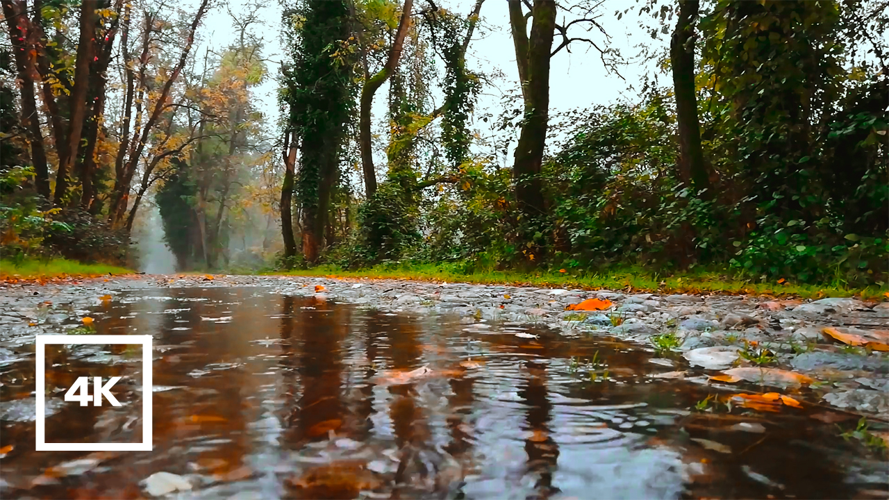 Read more about the article 8 Hours of Rain Sounds with Bird's Singing in the Forest